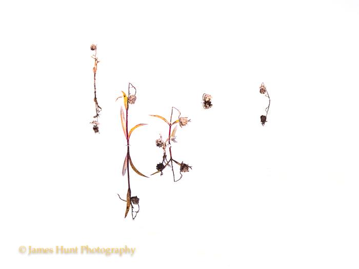 Hunt_171101P1000363-Edit